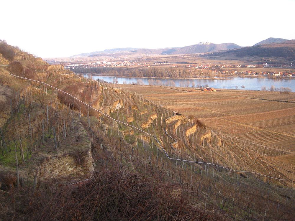 Terraced vinyards Wachua