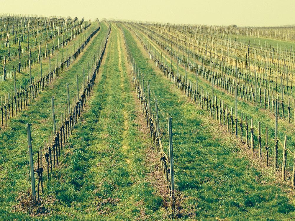 Netzl Vineyards