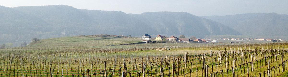 Winery fields